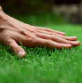 10 Tips For Maintaining A Healthy Lawn