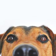 Dog lovers, these Android apps are for you